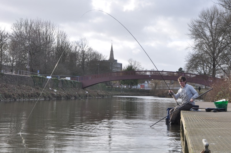 Coarse fishing Somerset River Tone