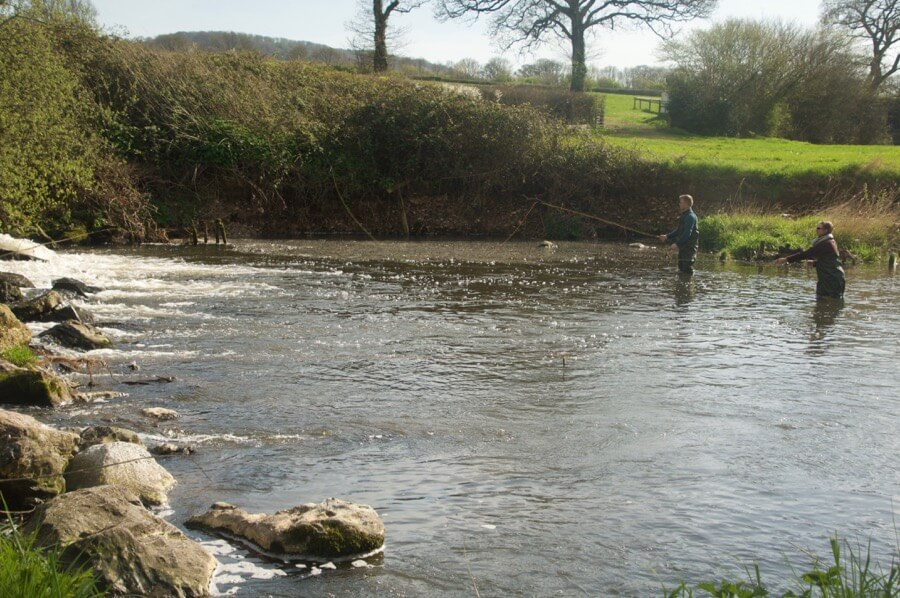 Guided Fly fishing River Otter Devon
