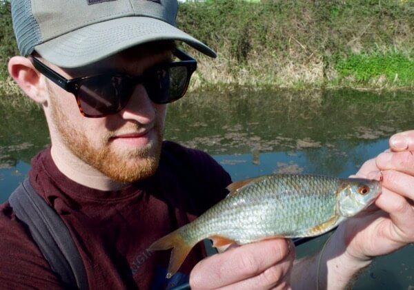 fly fishing for roach coarse fish
