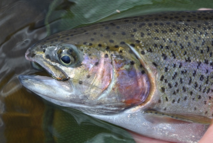 Guided Stillwater Trout Fly Fishing