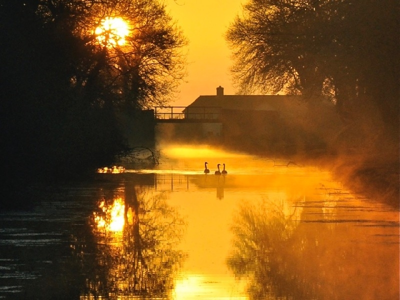 Golden canal fishing