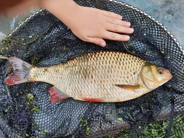 Big rudd fishing lessons somerset