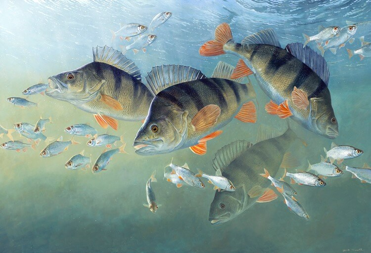 David Miller Fishing Artist