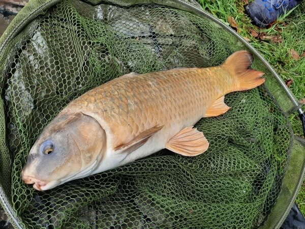 Viaduct carp fishing somerset south west lessons