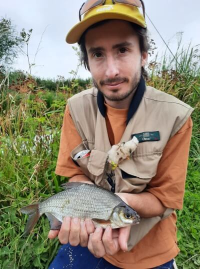 Fly caught silver bream Somerset