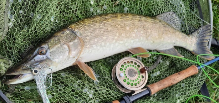guided Pike fishing somerset levels
