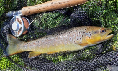 Guided fly fishing lessons devon