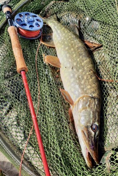 spring pike fishing Devon